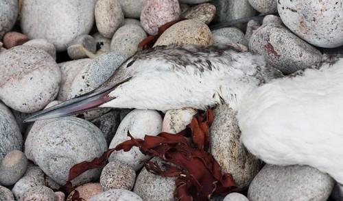 Unidenitifed dead bird