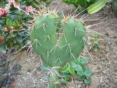Feliz dia dos namorados!!!! (stelax) Tags: love heart amor corao namorados cacto espinho diadosnamorados