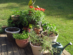 back porch planters