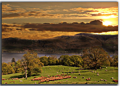Rural Harmony (DDA / Deljen Digital Art) Tags: uk trees sunset england sky cloud mountains nature scenery view sheep derwentwater cumberland lakedisrict