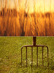 golden spikes and a hay fork (mazarin) Tags: light green golden diptych eveningsun spike dip sprout hayfork