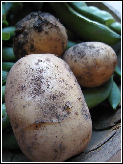 potatoes copy