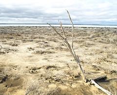 salt lake (dalinean) Tags: lake landscape dead death salt sigma australia saltlake sd10 westaustralia salinity landcare