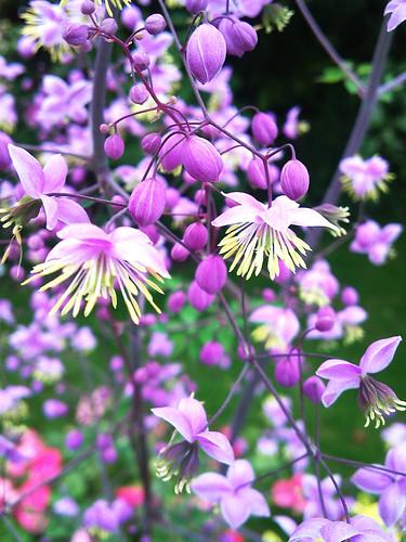 Nans Flowers