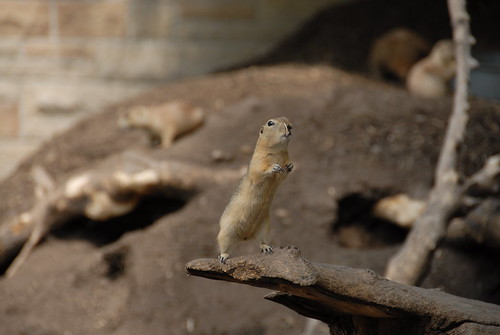 Assinboine Park Zoo - Prairie Dogs, Squirrel, Bison ...