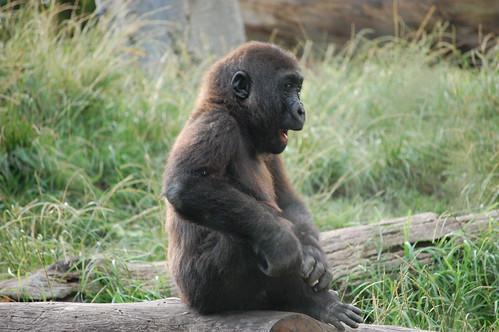 zoo 182