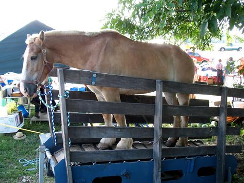 127 Yard Sale (9) - Horse