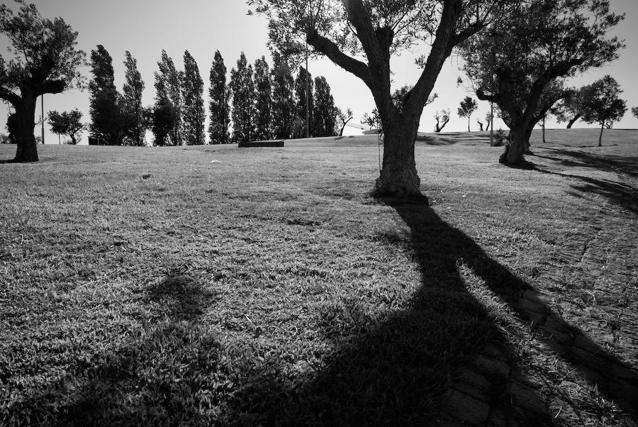 Jardim de Oliveiras, no alto do Parque Eduardo VII