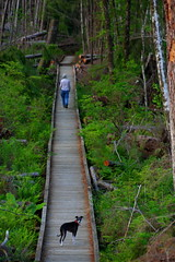 Bridge Over Troubled Forrest (jkeenan501) Tags: bridge woman dog storm astoria astoriaoregon fallentrees downedtrees forttoseatrail forttosea