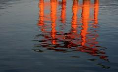 2008-07 Miyajima 02 (blogmulo) Tags: travel red reflection water japan island rojo agua ar floating miyajima viajes reflejo 2008 torii isla japon itsukushima japn itsukushimajinja shintoism flotante sintoismo blogmulo