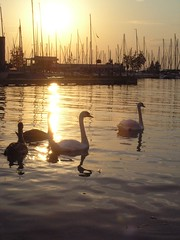 Sunset at Balaton (rafel678) Tags: fiatlux
