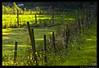 Weidezaun (def110) Tags: germany wiese freiburg zaun lightroom digitalcameraclub d80 nikond80