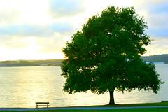 Alone tree (kezwan) Tags: tree nature uddevalla kezwan alonetree