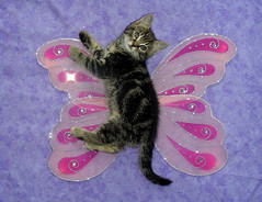 Kitten Fairy (Julia-D) Tags: cat kitten fairy ねこ かわいい cc100 こねこ