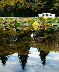 Autumn (ingao.) Tags: reflection water lago see agua eau wasser frankfurt bank reflejo palmengarten supershot