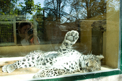 Zoo de Beauval 4