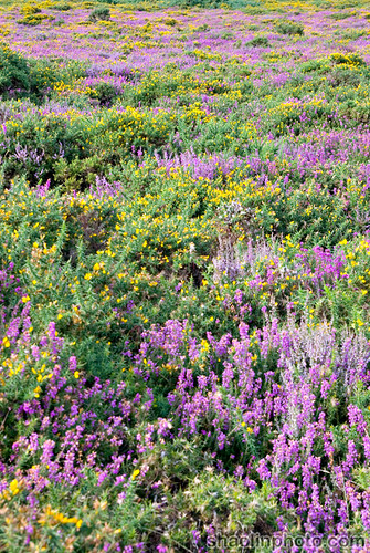 Somerset Moors