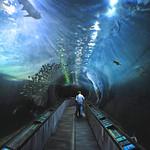 Aquarium of the Bay #66