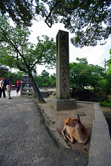 Nara (AdrienG.) Tags: japan pentax 10 sigma deer 20 nara japon daim k20d