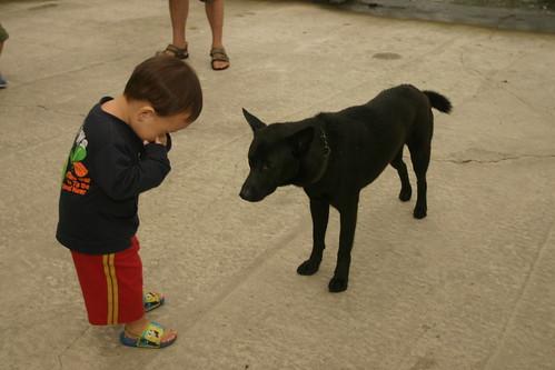 你拍攝的 三富花園農場:Min和小黑狗自我介紹。