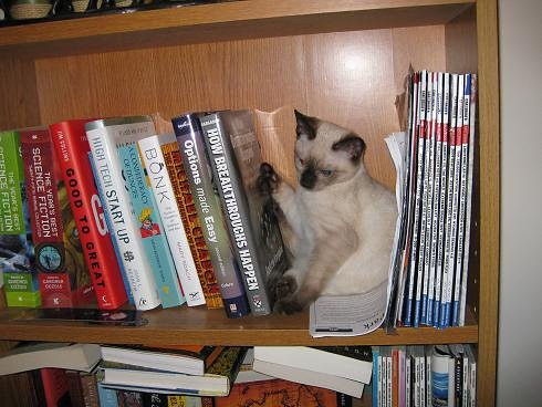 Athena explores the bookshelf
