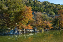 Fall (KenSA) Tags: color fall nikon d70 cypress foilage 2008 texasstateparks guadaluperver
