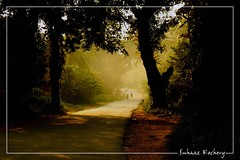 Way To Light (suhaaz Kechery) Tags: