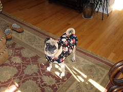 norman in his holiday jacket