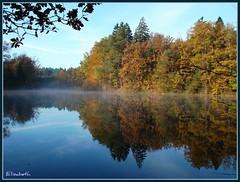Automne  Bitche (Puce55-Elisabeth, peu prsente) Tags: nature automne tang vosgesdunord paysdebitche vosplusbellesphotos