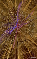 Electric Spider (JoelDeluxe) Tags: newmexico lights spider zoom web albuquerque dukecity nm joeldeluxe hdr biopark pnm riveroflights biozoom