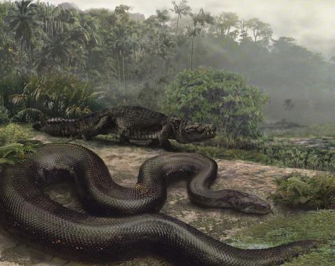 largest anaconda in world. World#39;s Largest Snake Ever