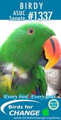 BIRD (fabbuki) Tags: birdy