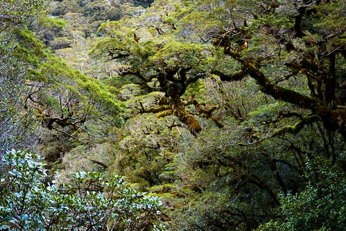 Jungle at Milford Sound
