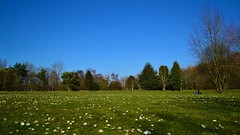 Laying on the grass (Nicki Ki) Tags: park family trees daisies picnic perspective vista distance vantage