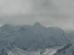 Bullstooth looks snowbound.