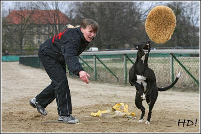 Hot Socks Greyhound