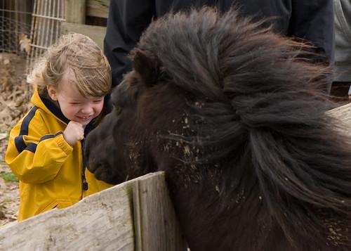 Boy Meets Horse