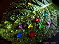 drops in technicolor (HiSpAnIcO[reloaded]) Tags: colour macro leaves foglie photoshop drops colore post experiment production technicolor esperimento multicolore produzione goccie aplusphoto