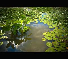 The aquatic garden (Megara Liancourt) Tags: reflexions vincennes floralpark parcfloral naturesfinest goldenglobe blueribbonwinner sonyalpha100 abigfave aplusphoto naturefinest colourartaward platinumheartaward goldstaraward atqueartificia