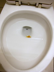 馬桶養金魚