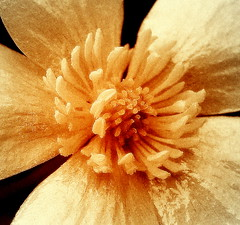 Structure of Nature (Subtle Shade) Tags: fineartphotos xoxoxoxoxoxo goodnightsweetfriend awesomeblossoms hugsmydear