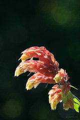 Do I see a... hand? (LRFarias) Tags: flower polarizer rebelxti ef14x ef70200f4lis