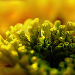 the heart of a marigold (janoid) Tags: bravo chapeau xoxoxox frommetoyou waitingforyoutocomeback janslightstyle janalicious janoidmagic xoxoxoxoxxoxo inthesettingsunlight inapotonmyfrontsteps myneighborsmustwonderaboutme orinmyjammiestakingpicturesofthesunriseorsunset theymustknowimwierdbynow iseemorethenfivehearts therestofaredoomed yourgoodrealgood tttttttttttttttttttttttttt putsomemusiconthatssoftandslow sooftenonthegroundonmysidewalkorinmyyard ohwellthepriceofmyphotographyaddiction ifyourwierd manquelitosendsyouxoxoxoxo hehasyouknowwhataroundhiseyes hesaiditremindshimofyou ishegone