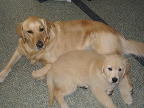 Rosie & Bailey