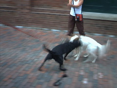 Dogs in Action01