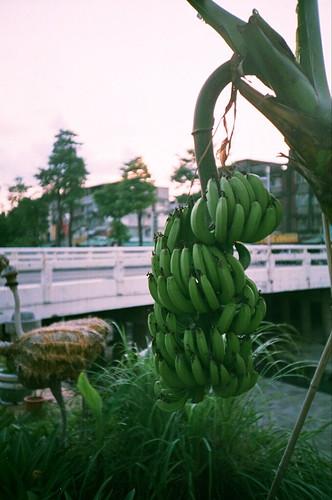 路邊有香蕉!