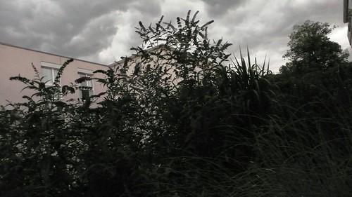 Storm over the garden, Feldbrunnen