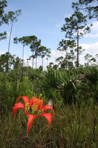 JDSP Pine Lily Hike 8-22-08 283