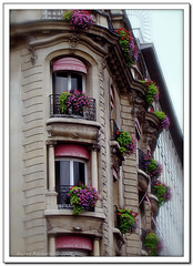 balconi parigini (Andrea Rapisarda) Tags: flowers paris beauty fiori bellezza parigi elegance balconi eleganza mywinners abigfave andrearapisarda