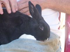 Bunny licks